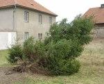 také v Dušníkách padl vzrostlý strom